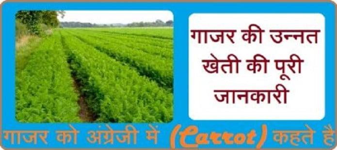 गाजर की उन्नत खेती कैसे करें