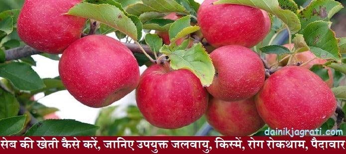 सेब की खेती