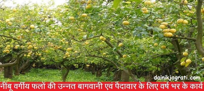नींबू वर्गीय फलों की उन्नत बागवानी