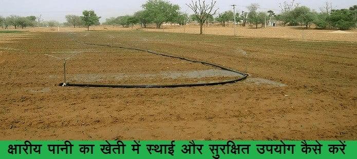 क्षारीय पानी का खेती में स्थाई और सुरक्षित उपयोग