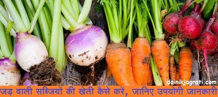 जड़ वाली सब्जियों की खेती कैसे करें, जानिए उपयोगी जानकारी