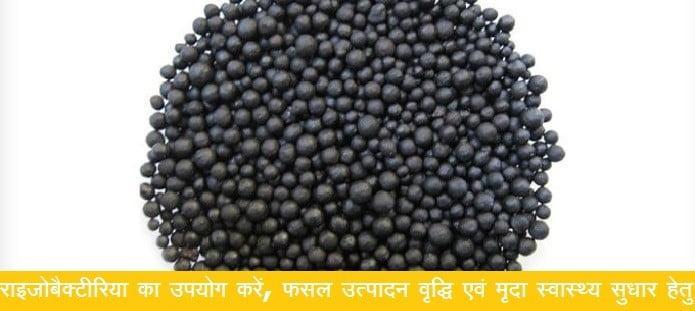 राइजोबैक्टीरिया का उपयोग करें, फसल उत्पादन वृद्धि एवं मृदा स्वास्थ्य सुधार हेतु