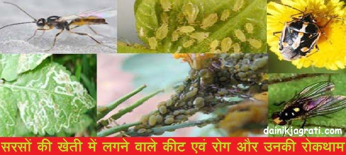 सरसों की खेती में लगने वाले कीट एवं रोग