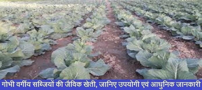 गोभी वर्गीय सब्जियों की जैविक खेती, जानिए उपयोगी एवं आधुनिक जानकारी