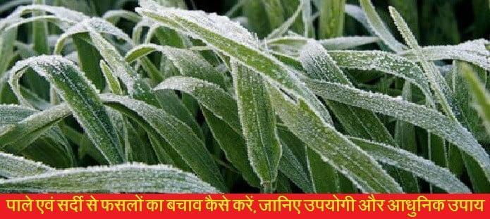 पाले एवं सर्दी से फसलों का बचाव कैसे करें, जानिए उपयोगी और आधुनिक उपाय