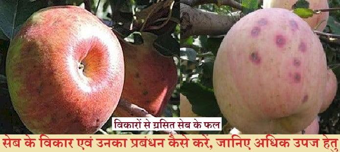 सेब के विकार
