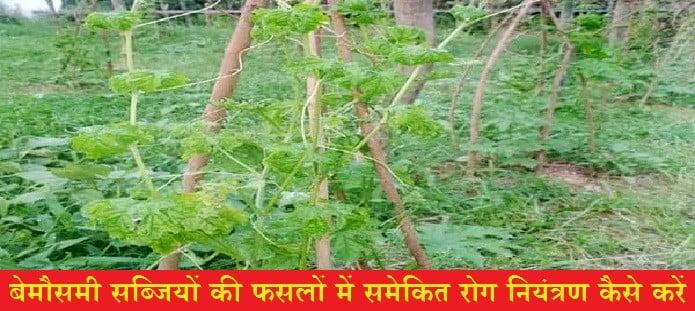 बेमौसमी सब्जियों की फसलों