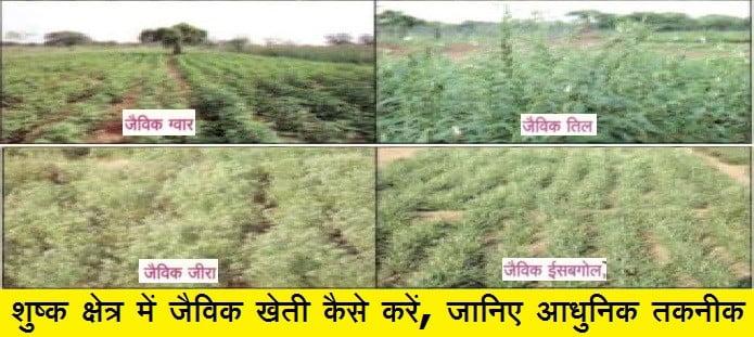 शुष्क क्षेत्र में जैविक खेती कैसे करें